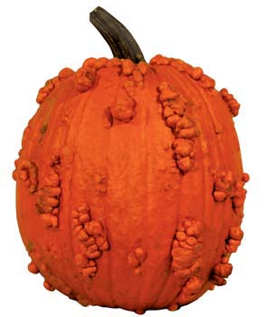 Special Pumpkins At Nipomo Pumpkin Patch